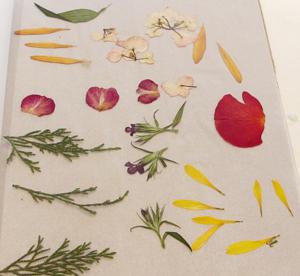 La imagen tiene un atributo ALT vacío; su nombre de archivo es dried-flowers-parchment-1.jpg